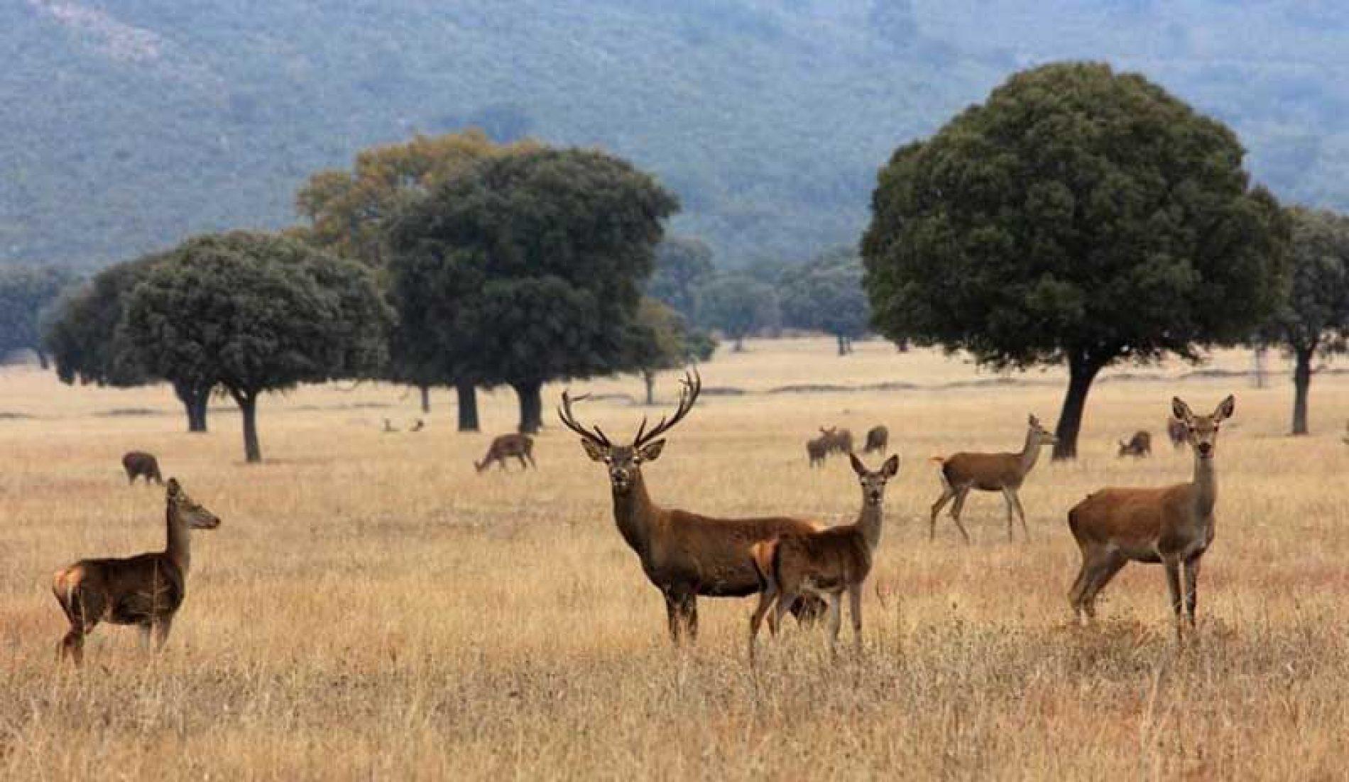 ¿Cómo controlamos la sobreabundancia de ciertas especies de fauna en los parques nacionales?