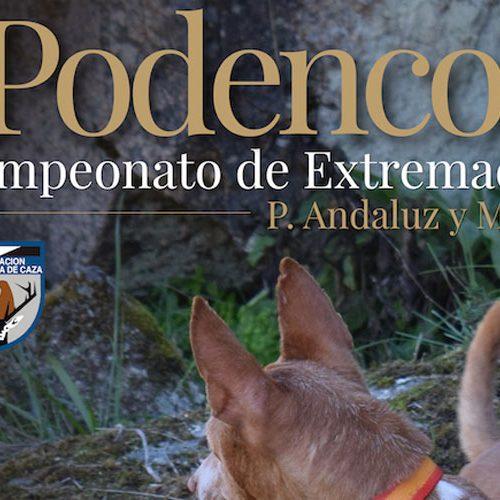 Navalmoral acogerá el 9 de mayo el Cpto. de Extremadura de Trabajo para Podenco Andaluz y Maneto