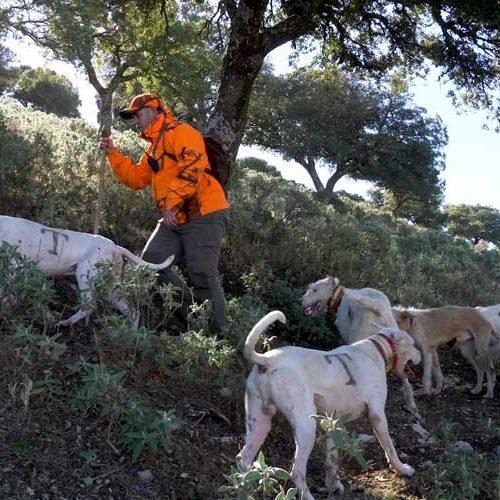 ARRECAL alerta que la DG de Derechos de los Animales asume competencias sobre los núcleos zoológicos