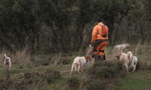 La AER advierte a los ayuntamientos andaluces que los datos de las rehalas no son públicos