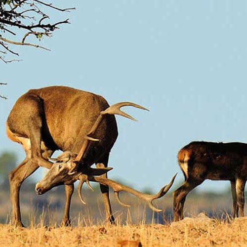 La RFEC exige la modificación de la Ley de Parques Nacionales a Teresa Ribera