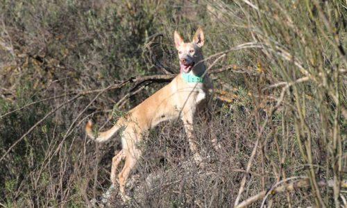 La FAC propone una norma concreta para animales auxiliares en la Ley de Bienestar Animal andaluza