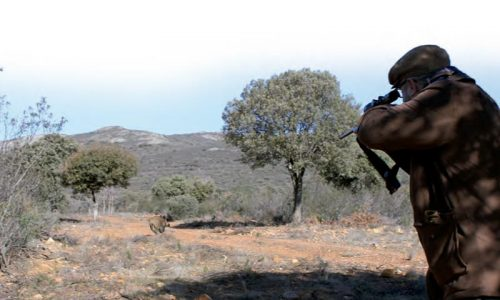El jabalí y su caza