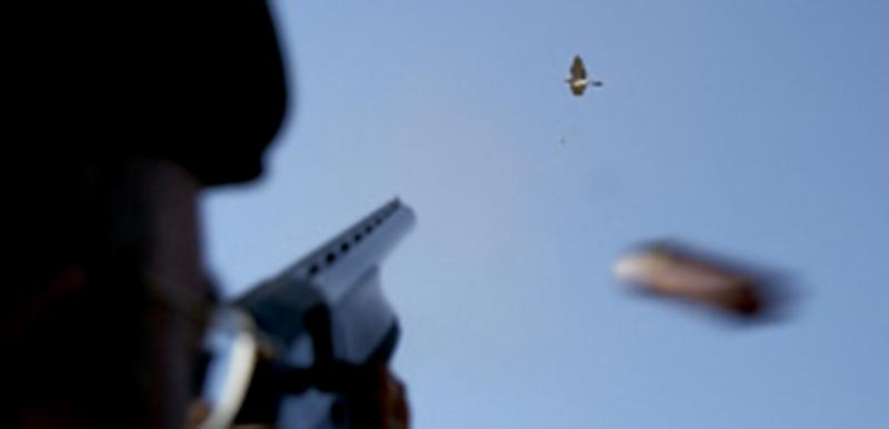 Disparando paloma