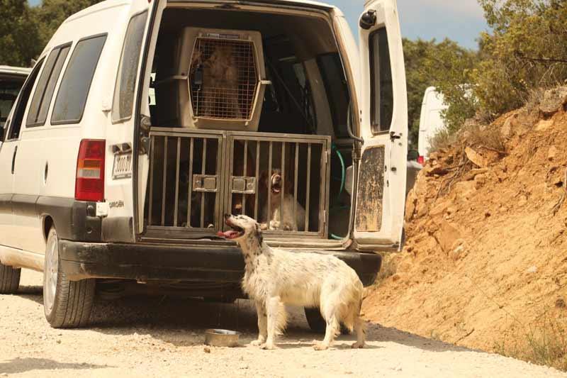 perros en transportines