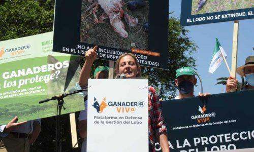 El mundo rural reivindica la gestión del lobo para la supervivencia de la España vaciada