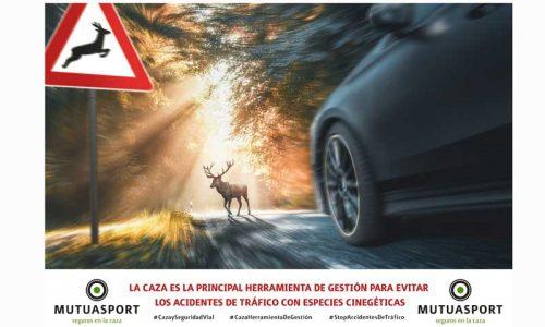Mutuasport lanza un vídeo sobre la necesidad de la caza para frenar los accidentes de tráfico