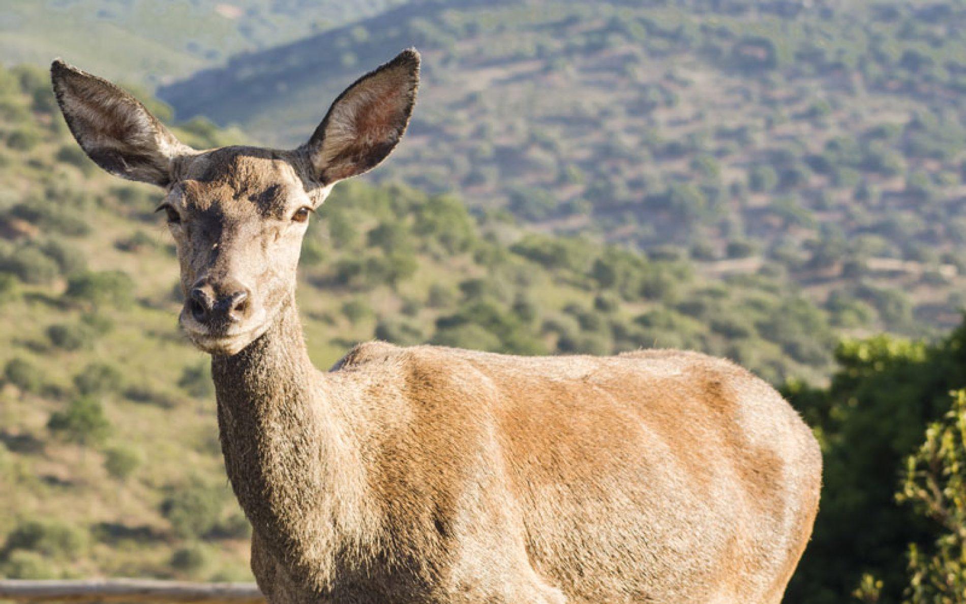 La matanza en el Parque Nacional de Monfragüe llega a la Fiscalía General