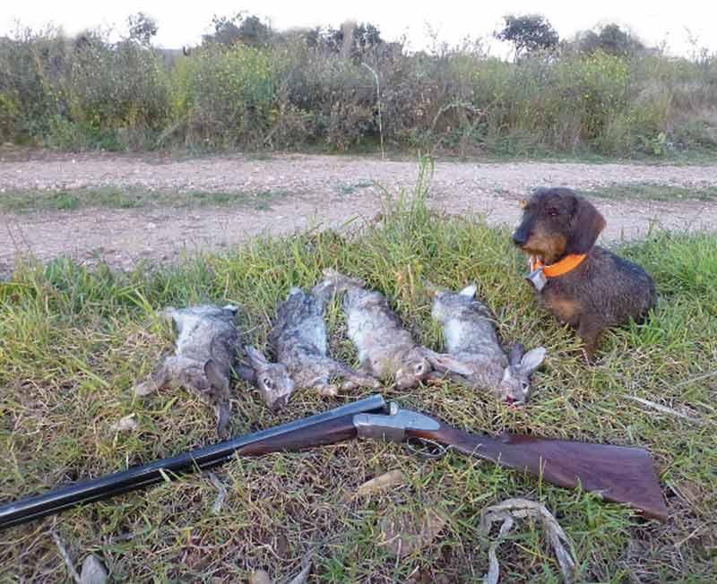 Teckel con conejos
