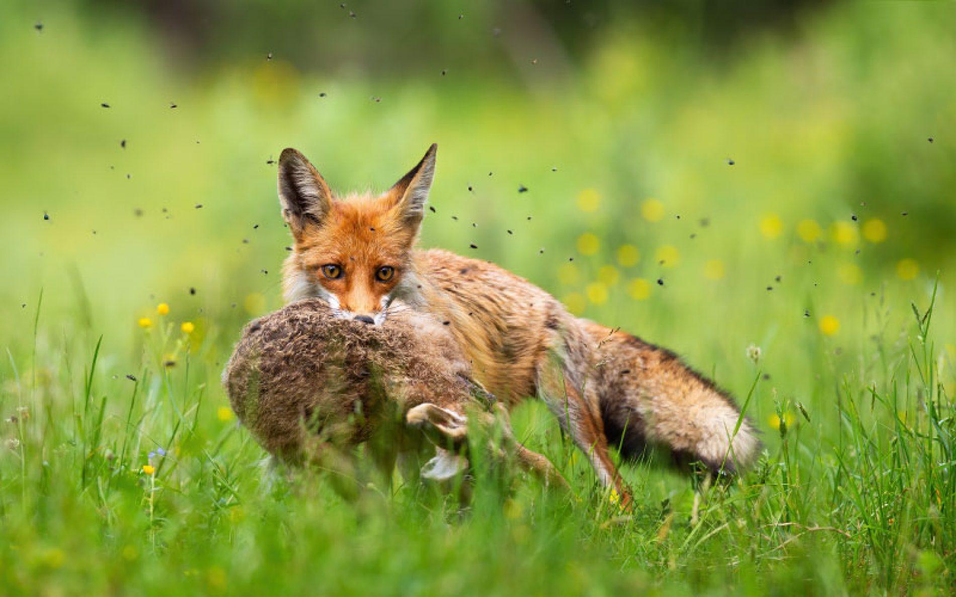 El 'pozo de la predación', un problema pendiente de solucionar por Medio Ambiente