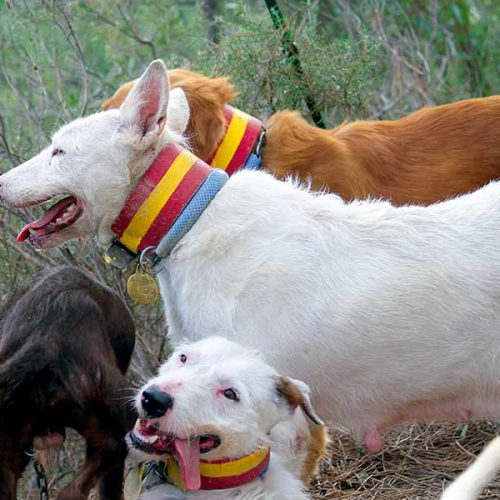 ¿Los Valdueza, una nueva raza de perros?