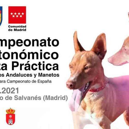 I Campeonato Autonómico de Caza Práctica para Podenco Andaluz Maneto