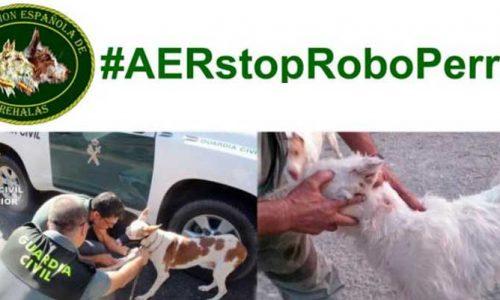 La Asociación Española de Rehalas, contra el robo de perros