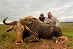 King-Wildebeest caycam